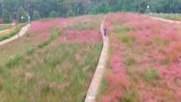 粉色花田 邂逅浪漫