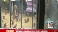 隔壁养鸡邻居不敢开窗 多部门调解双方达成共识