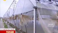 强降雨袭击:万亩瓜菜受损严重 农技人员指导抢救