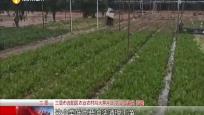 强降雨袭击:蔬菜基地里农户抢收忙 大雨过后加强田间管理