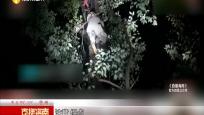 迷惑行为!男子深夜爬树吃蜂蛹被困