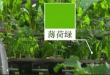 最美中國色|三分鐘回眸輝煌70年之現代農業篇
