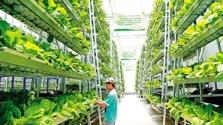 海南拟奖励1-3家省级现代农业产业园 奖补资金700万元