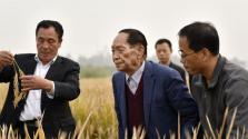 畝產1203.36公斤:袁隆平團隊的超級雜交稻再創紀錄