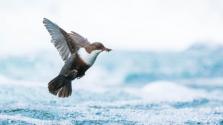 2018年歐洲野生動物攝影師獎揭曉 發現自然之美