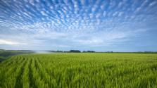 新稻2208万吨:我国中央储备粮家底进一步夯实