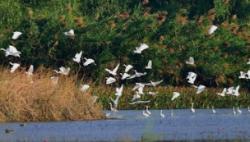 中共中央 国务院 关于全面加强生态环境保护 坚决打好污染防治攻坚战的意见