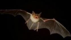 危险!西班牙今夏两人被携带狂犬病毒蝙蝠咬伤