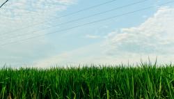 """""""科技""""""""品质""""带来的田野革命——广西推动现代特色农业提质增效纪实"""