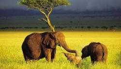 联合国《生物多样性公约》第十四次缔约方会议在埃及开幕