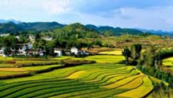 坚持农业农村优先发展总方针 ——贯彻落?#23707;?#20013;央一号文件精神②
