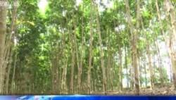 李军在白沙调研海南热带雨林国家公园生态移民搬迁工作