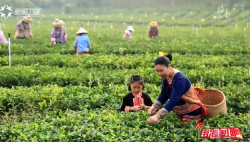 南海回响·海口施茶村:又是一年春好时 乡村振兴再发力
