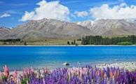 """""""一带一路""""倡议给新西兰带来发展新机遇"""