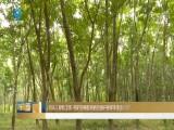 海南推进天然橡胶价格(收入)保险工作  有开割橡胶树的贫困户参保率要达100%