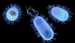 厨房清洁用海绵现噬菌体 或能助人类对抗耐药菌