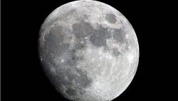 """""""月球树"""":500颗种子遨游太空后,回地球生根发芽"""