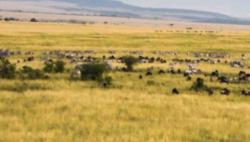 肯尼亚现迷你猴化石 英媒:或改变人类对进化认知
