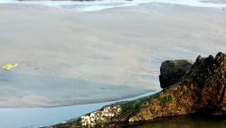 波羅的海海底發現森林遺跡 已有1萬年歷史