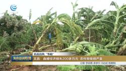 """抗擊臺風""""韋帕"""":文昌:直接經濟損失200多萬元 農作物受損嚴重"""