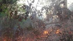 亚马孙雨林大火或造成永久性伤害 专家称人为因素是火灾主因