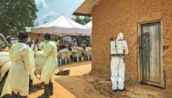 刚果(金)埃博拉疫情已致近2000人死亡