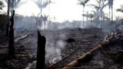 巴西總統府回應保護雨林呼聲:正全力以赴應對危機