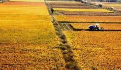 国家粮食和物资储备局相关负责人解读今年秋粮收购情况