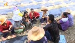 精准扶贫:农技专家走进白沙对俄村 传授技术帮扶产业发展
