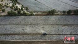 中央財政提前下達2020年農田建設補助資金預算616億元