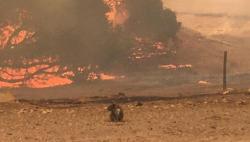 山火未灭暴雨又至!澳两大世界遗产林区过半已被毁