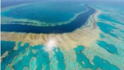 海水溫度高于均溫 澳大利亞大堡礁再現珊瑚白化跡象