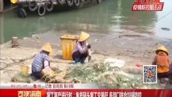 復工復產進行時:魚貨碼頭復工交易旺 多部門聯合加強防控