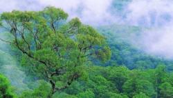 森林草原防灭火形势日趋严峻 国家森防办、应急管理部多举措积极应对