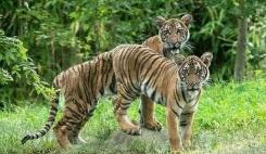 猫狗虎新冠检测呈阳性 专家称无证据动物传染给人