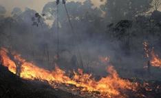 亚马孙雨林山火灾难恐重演:单日破千起,9月预计将达高峰