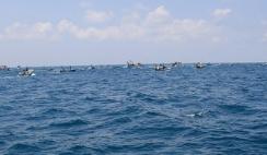 以色列缩减加沙地带捕鱼区范围