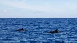 """多图!在南海,科学家这样寻找""""鲸""""喜"""