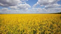 联合国粮农组织呼吁减少粮食损失和浪费