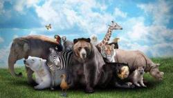 联合国生物多样性峰会:保护生物多样性迫在眉睫