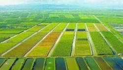 农业农村部:预计今年粮食产量再创历史新高