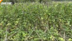 """防御""""沙德尔"""":各地加强技术指导 确保农业生产不减产 农民收入不降低"""