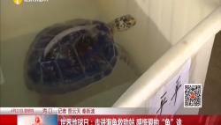 """世界地球日:走进海龟救助站 感悟爱的""""龟""""途"""
