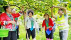 五部门印发指导意见加强农村就业帮扶