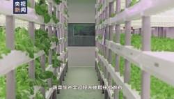 """航天员出征前吃的青菜哪里来?走进东风航天城""""蔬菜工厂"""""""