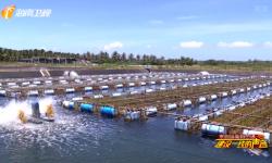 来自海南自贸港建设一线的声音 海关多举措力促水产品出口增长 上半年出口7.5万吨