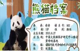 熊猫来啦:《熊猫档案》了解一下!