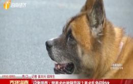 热点关注:海口最严养犬管理条例出台 违规最高可罚10万元