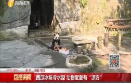 """西瓜冰塊冷水澡 動物度夏有""""涼方"""""""