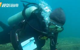 國內首個5G+8KVR水下直播秀(一) 探秘海南首個國家級海洋牧場示范區